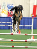 Athena in agility