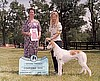 Sangi Wins Coursing Dog 2003