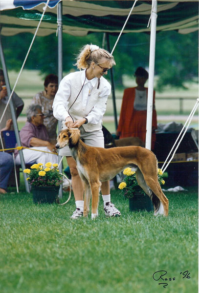 Rush in the show ring SCOA 1996